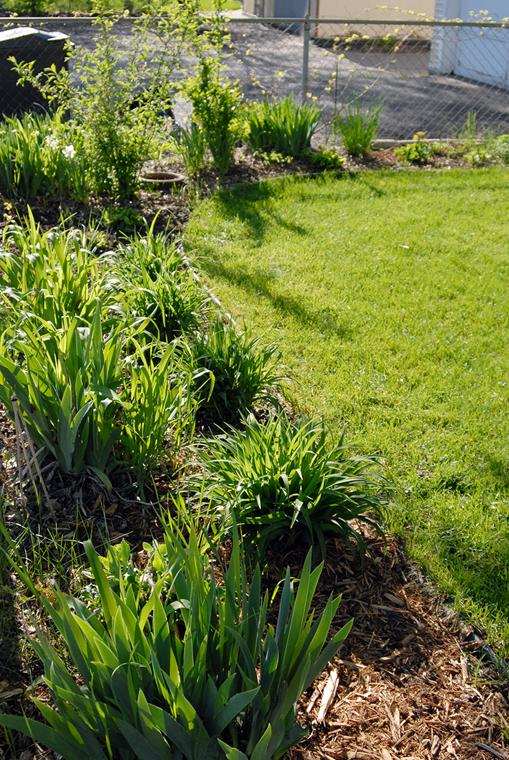 Iu0027ve Been Thinking A Lot About The Garden/yard I Had In Minneapolis. I  Gardened There For Six Summers And Had Pretty Much Got It To The Point  Where All I ...